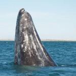 明るさの単位はクジラが基準?